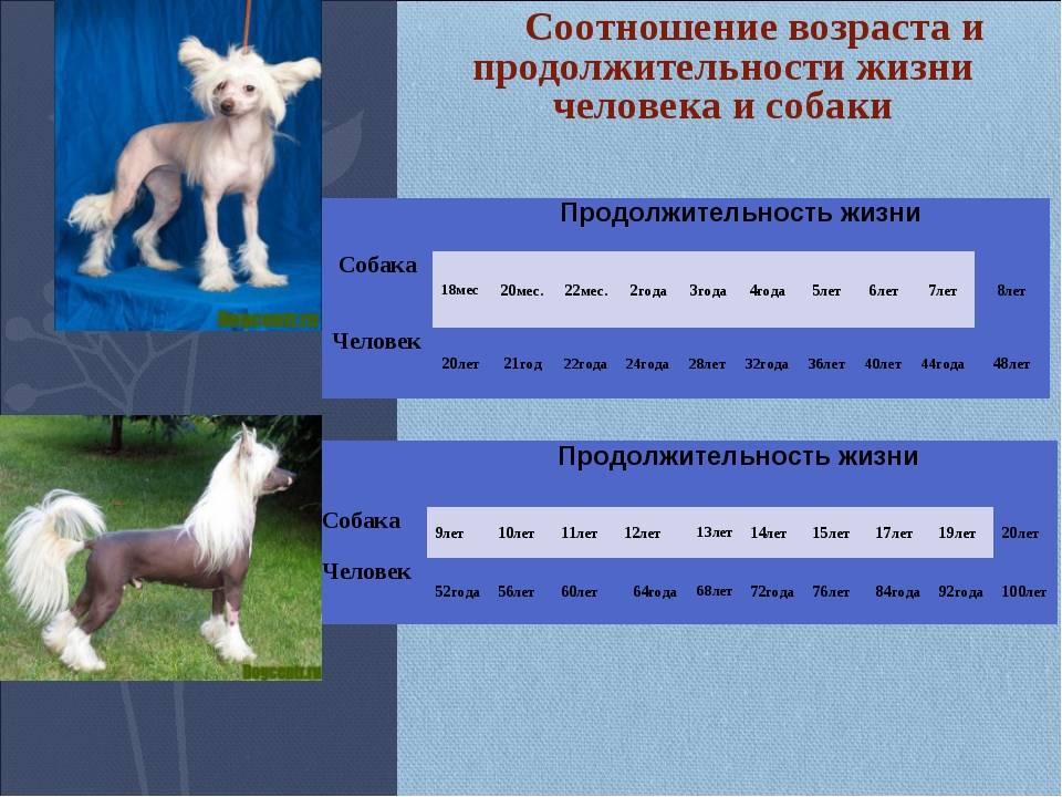 Таблица продолжительности жизни животных: статистика и средний возраст