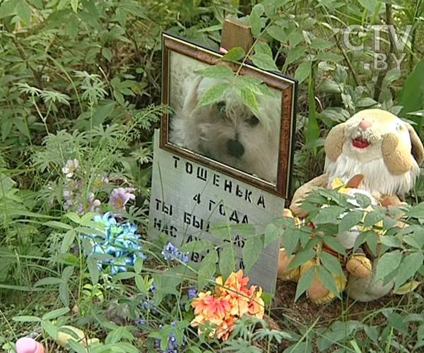 Собака умерла: что делать?