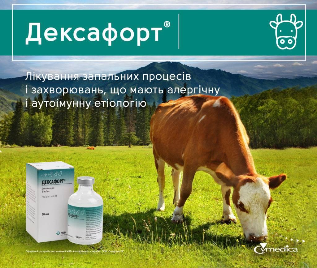Дексафорт для собак: противопоказания, свойства, побочные