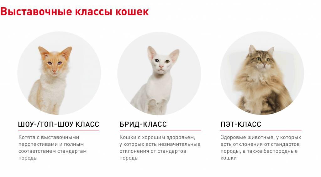 Породы кошек – какая есть международная классификация, самые популярные животные