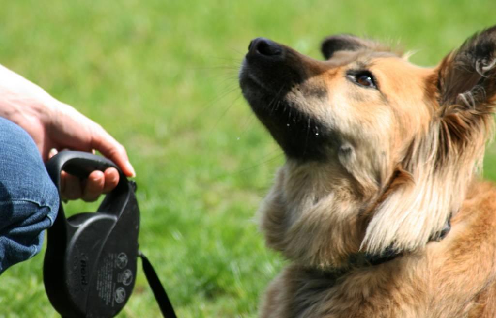 Как дрессировать собаку: полезные советы и важные правила