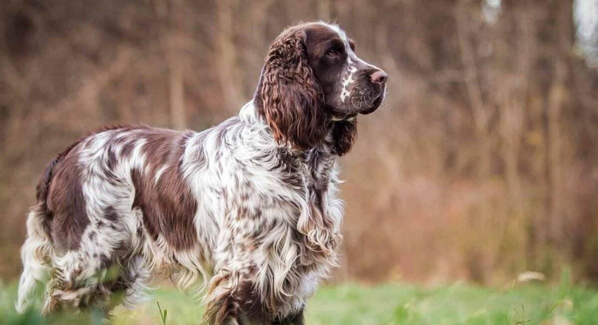 Всеми любимые английские породы собак