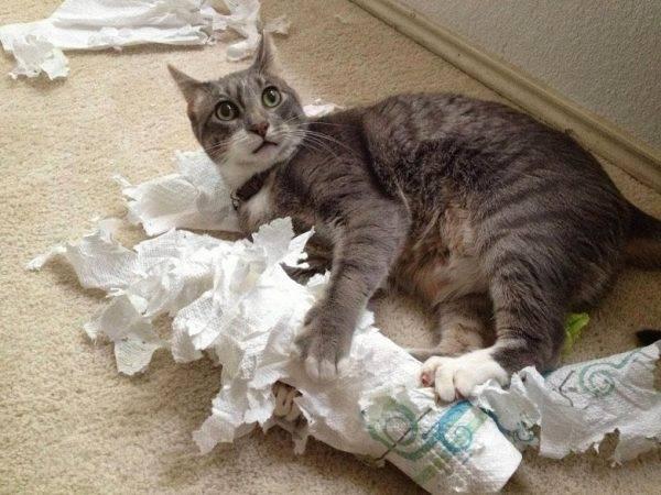 Как улучшить жизнь кошке