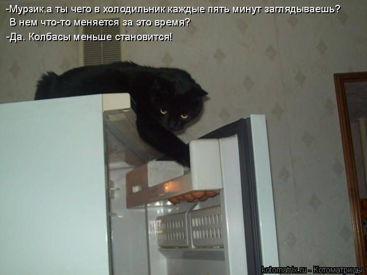Модели дверцы для кошек во входную и туалетную дверь. установка дверцы для кошек в дверь