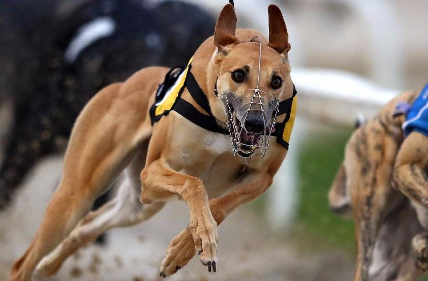 Лидеры рейтингов – самые лучшие породы собак в мире: умные, сильные, красивые