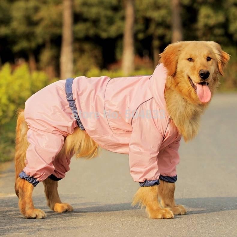 Разновидности дождевиков для собак мелких, средних и крупных пород