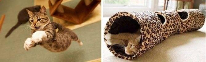 ᐉ что будет, если кошке или коту отрезать усы: последствия. вырастут ли у кошки обрезанные усы? - studio-edem.ru