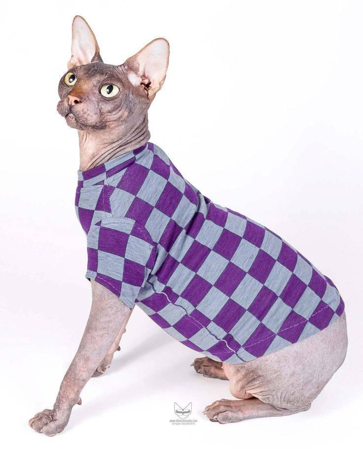 Одежда для сфинксов: особенности выбора костюма для животных этой породы, как сделать своими руками