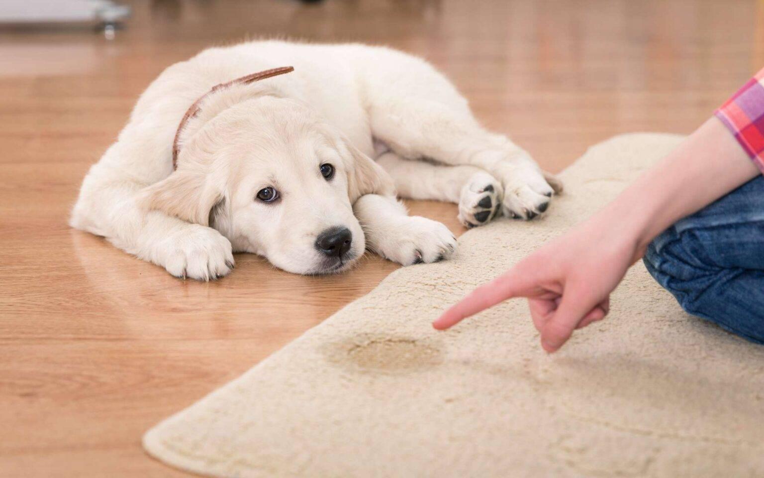 Как избавиться от запаха собаки в квартире: топ 20 лучших средств и способы
