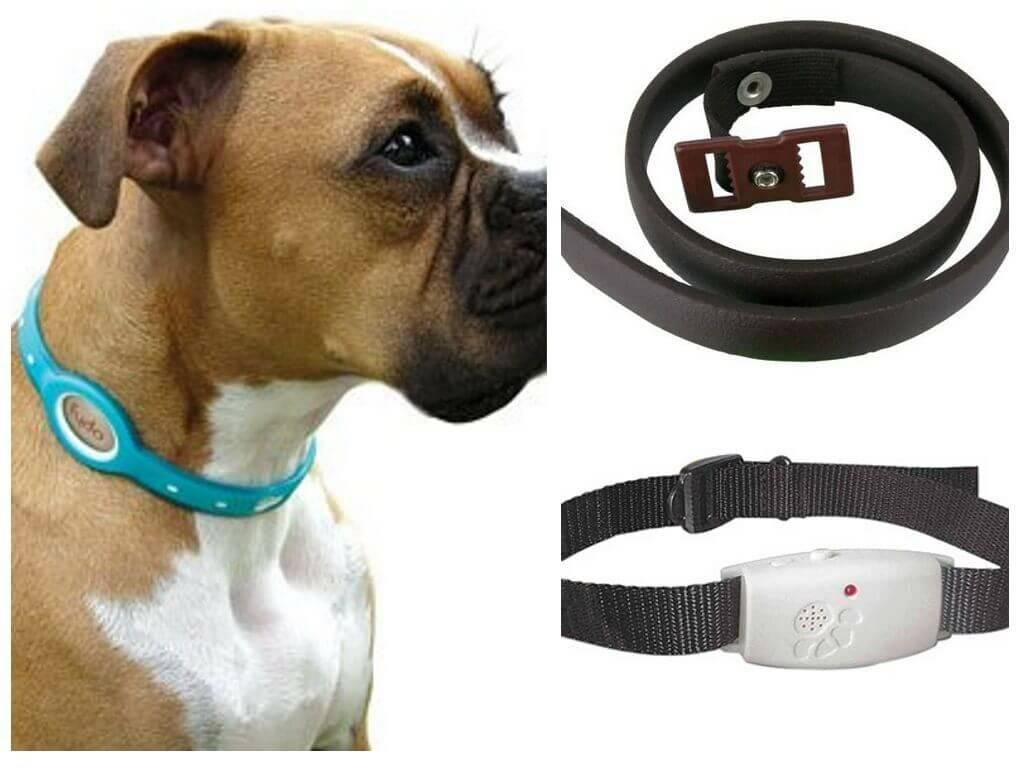 Ошейник для щенка: повседневные, для прогулки, от блох, как выбрать, популярные бренды, как приучить щенка