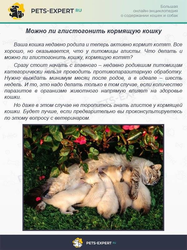 Таблетки от глистов для собак | названия и показания к применению таблеток от глистов для собак | компетентно о здоровье на ilive