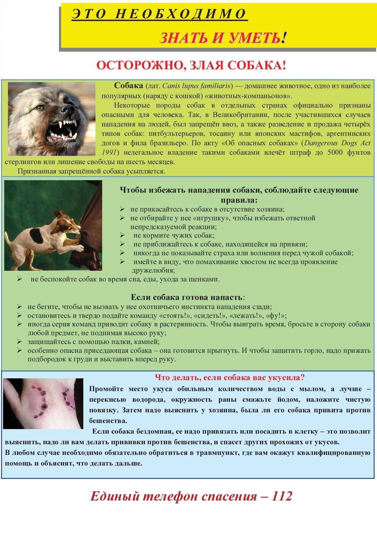 Если собаку укусила оса: что делать, первая помощь и предупреждение шока