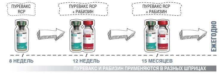 Пюрвакс (пуревакс) rcpch - купить, цена и аналоги, инструкция по применению, отзывы в интернет ветаптеке добропесик