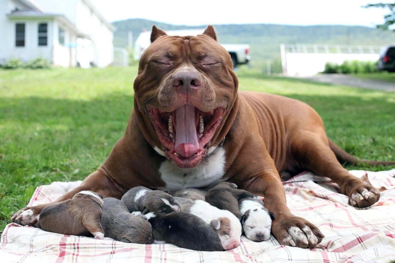 20 самых сильных пород собак в мире