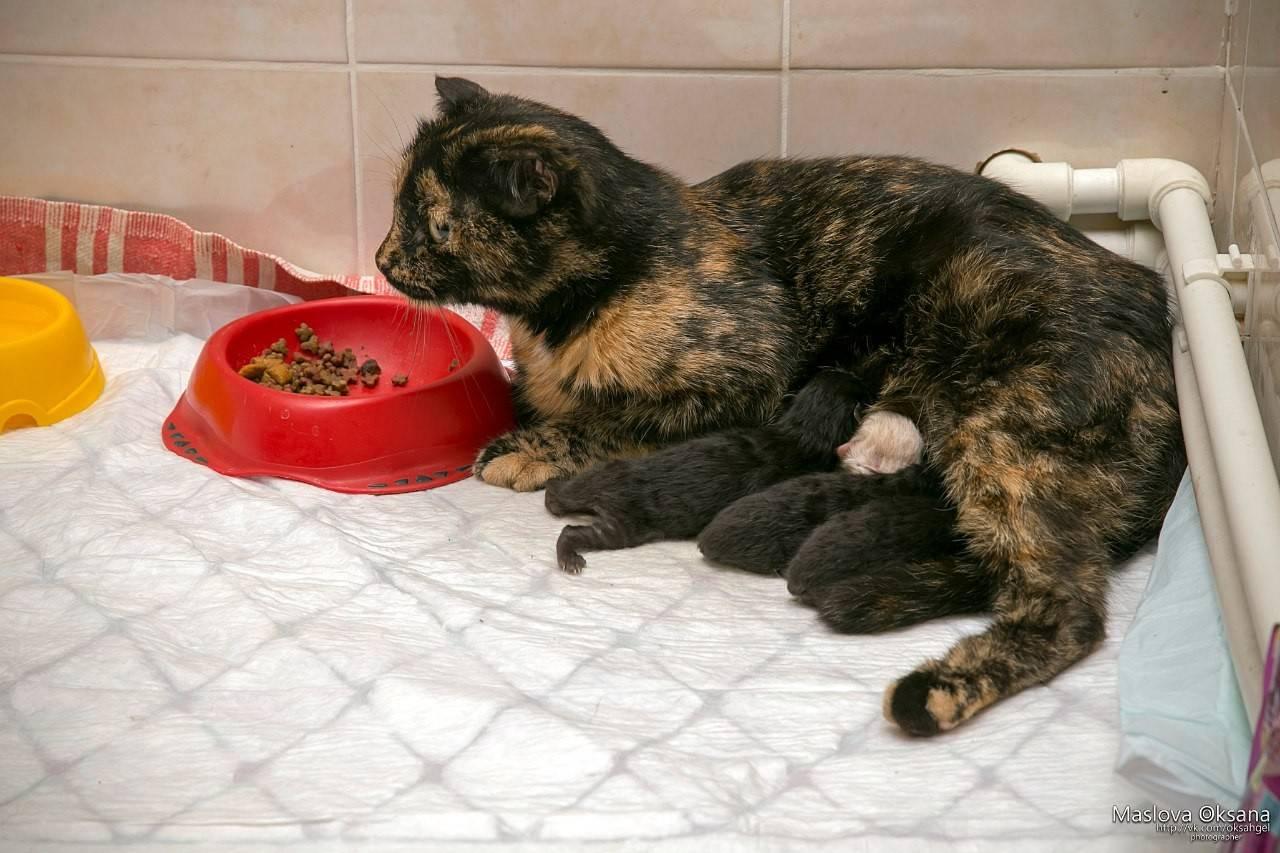 Как принять роды у кошки в домашних условиях | как правильно