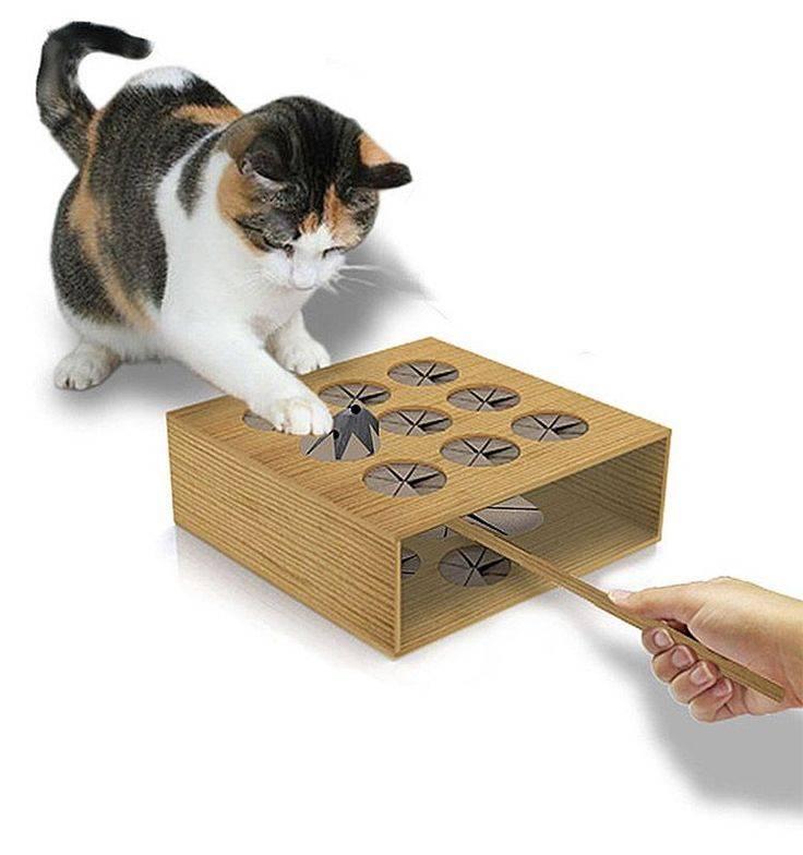 Как сделать своими руками игрушки для кота или кошки в домашних условиях из подручных материалов?