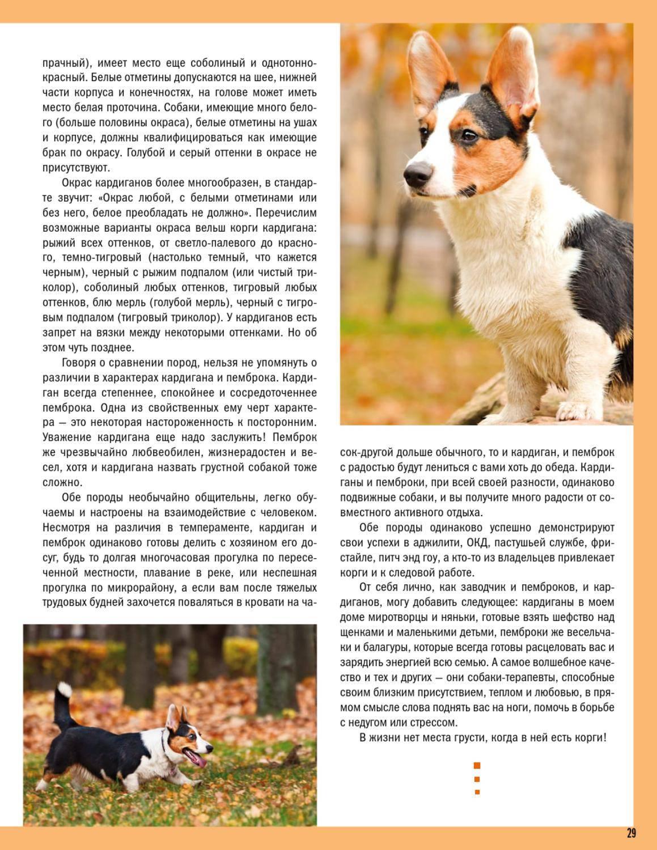 Вельш корги собака. описание, особенности, виды, уход и цена породы вельш корги | живность.ру