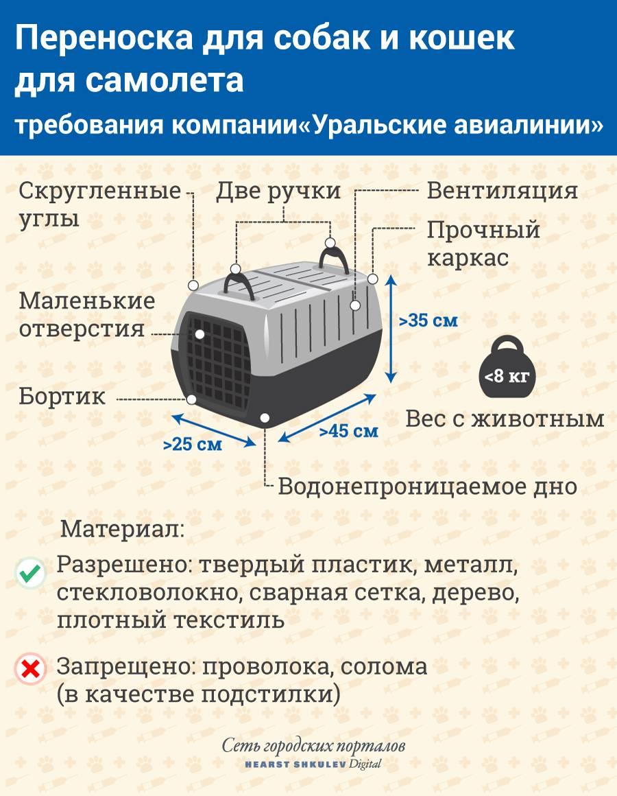 Правила перевозки животных в самолетах аэрофлота