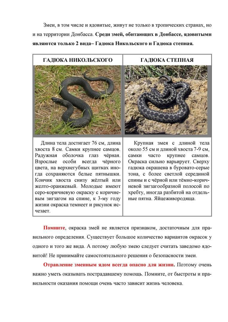 Собаку укусила змея: советы ветеринарного врача