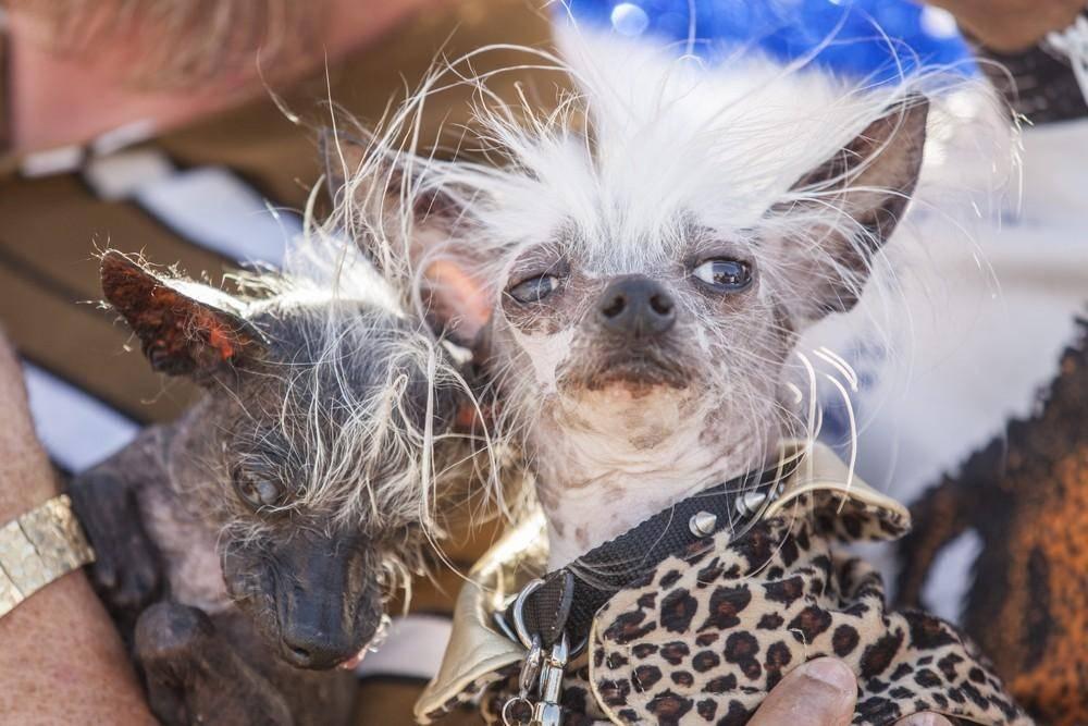 Самые страшные собаки в мире | интересный сайт