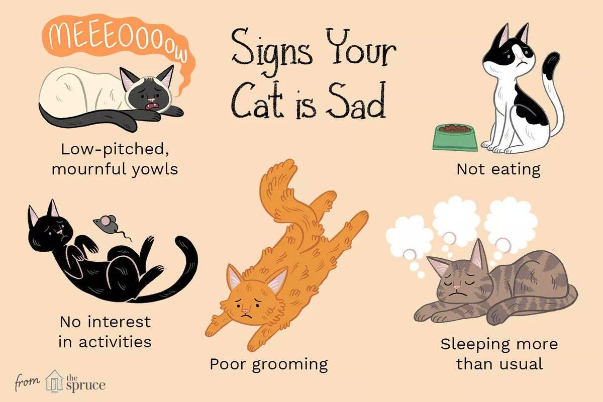 9 признаков того, что вы хороший хозяин для своей кошки