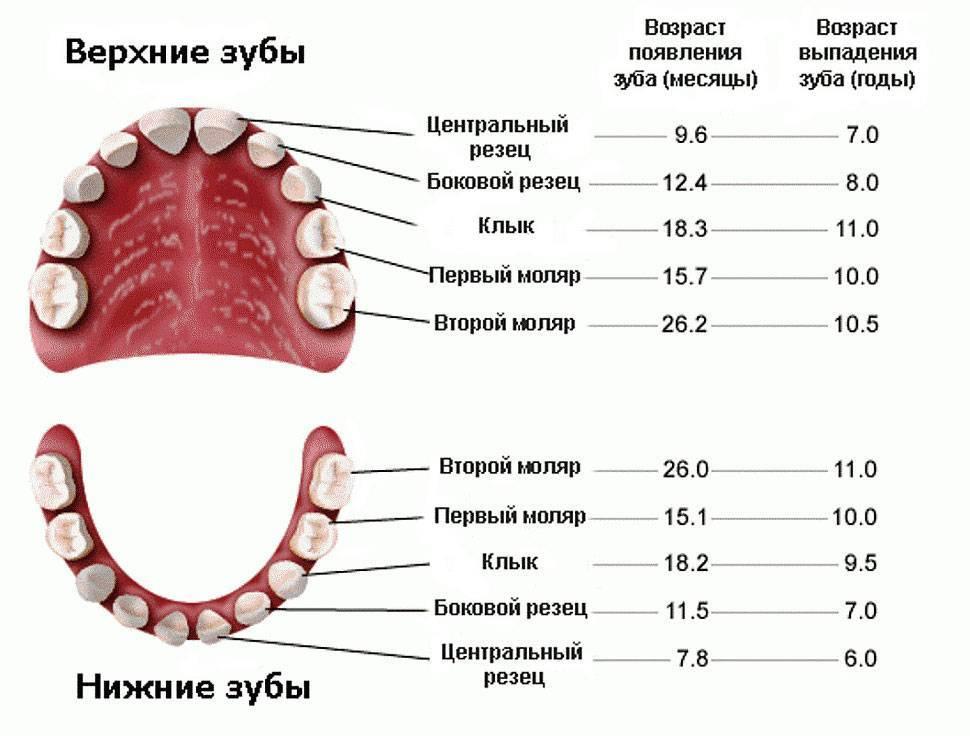 Трофическая язва. причины, симптомы, диагностика и лечение венозной трофической язвы