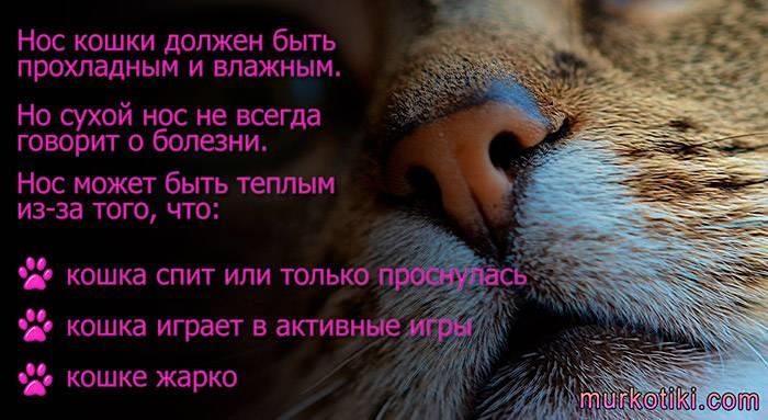 Каким нос должен быть у здоровой кошки: советы по уходу