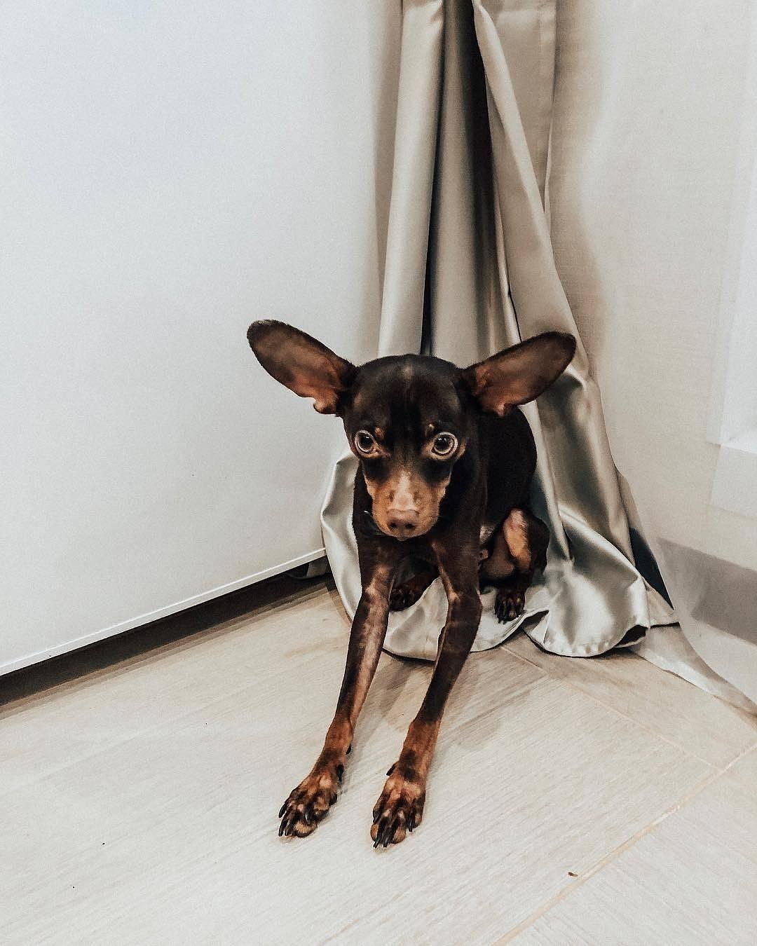 Породы маленьких собак для квартиры с фотографиями и названиями