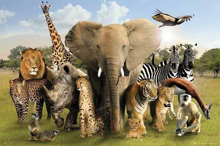 5 животных, от которых зависит жизнь всей фауны - gafki.ru