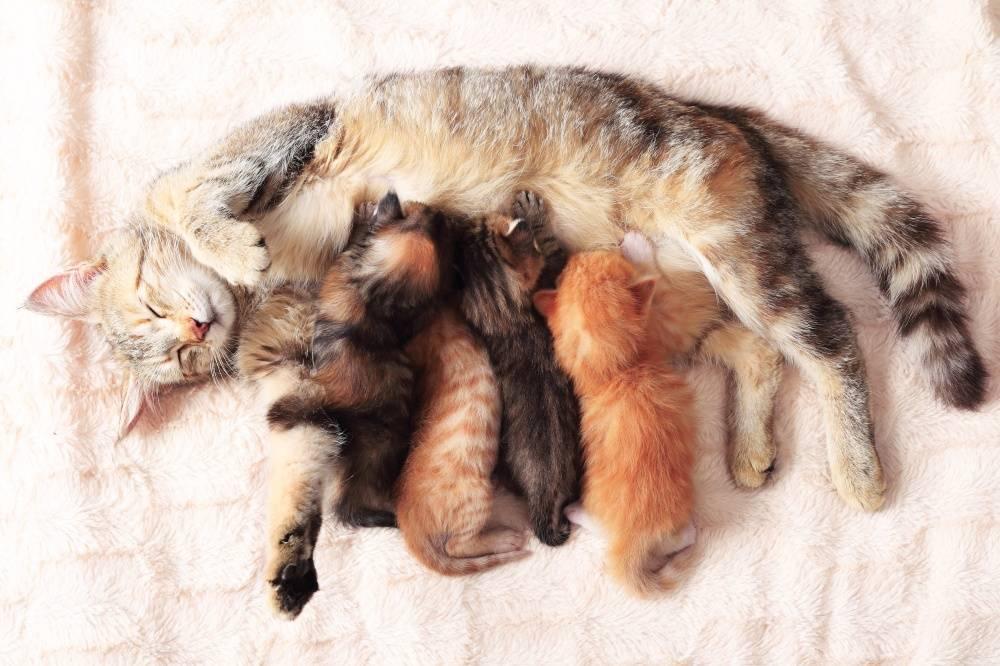 Можно ли давать от глистов беременной кошке