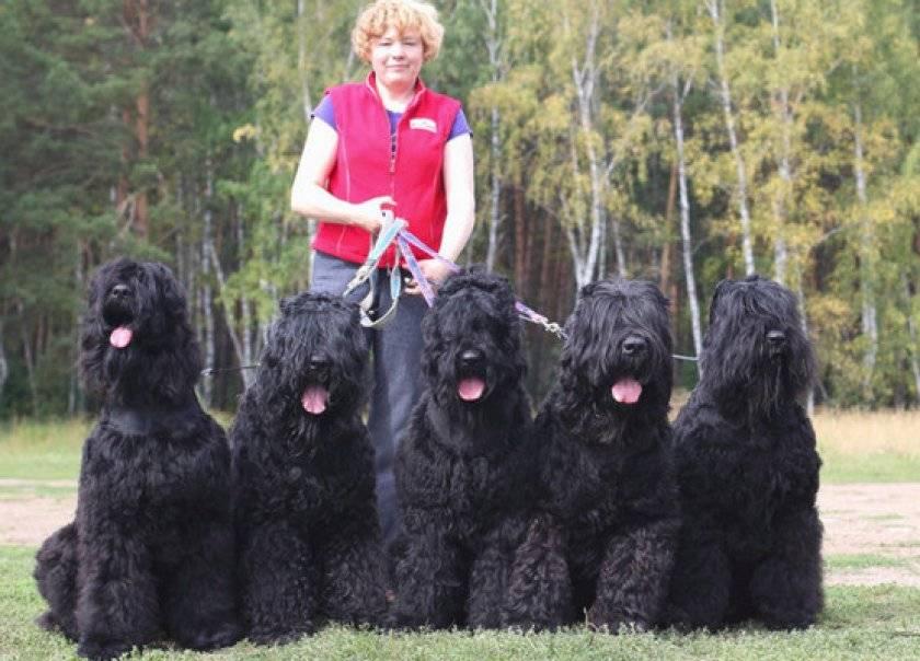 Породы собак, выведенные в россии, с фотографиями и названиями