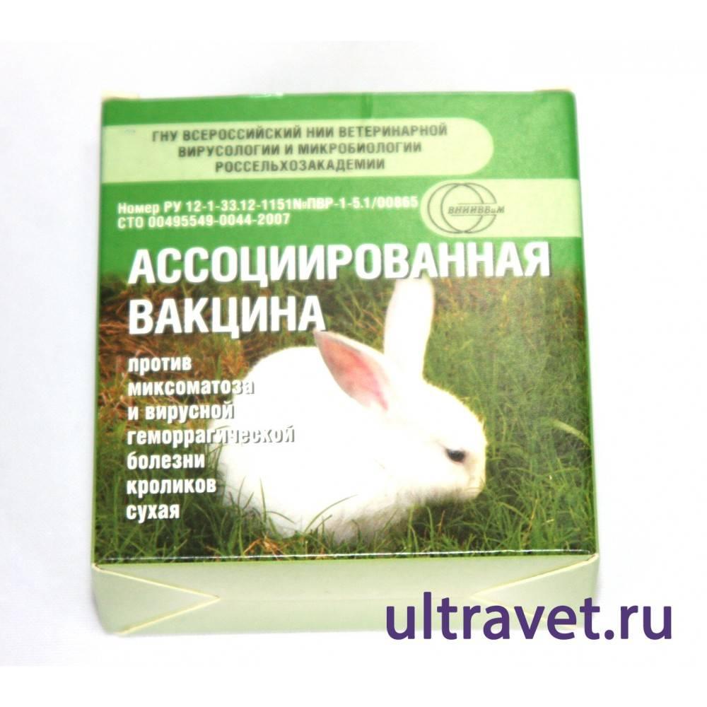 Ассоциированная вакцина для кроликов как разводить и колоть - агро эксперт
