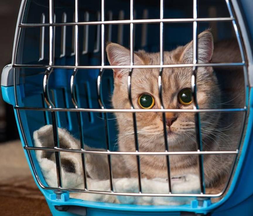 Кот орет по ночам: что делать, основные причины, как успокоить животное, чего нельзя делать