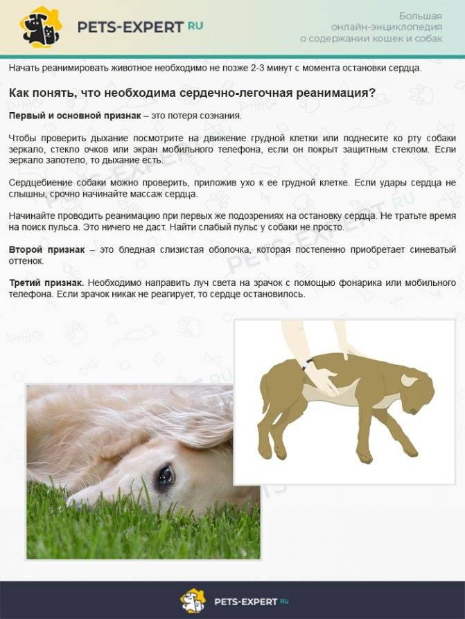Одышка у собаки причины и лечение - почему собака тяжело и часто дышит высунув язык