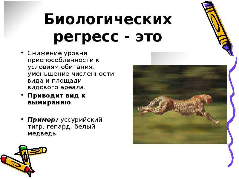 Андская кошка: описание, характер, среда обитания и образ жизни, фото