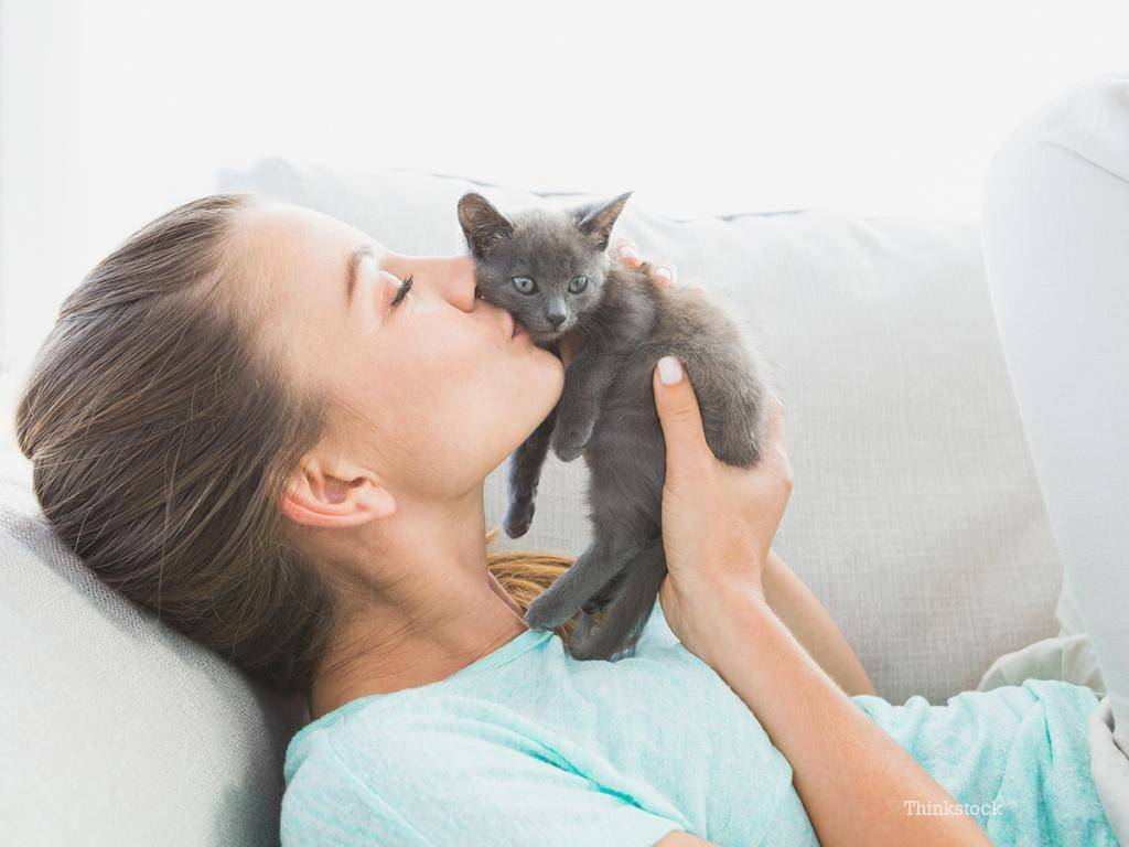 Почему кошка лижет руки хозяину: топ-7 причин почему кошка лижет руки хозяину: топ-7 причин