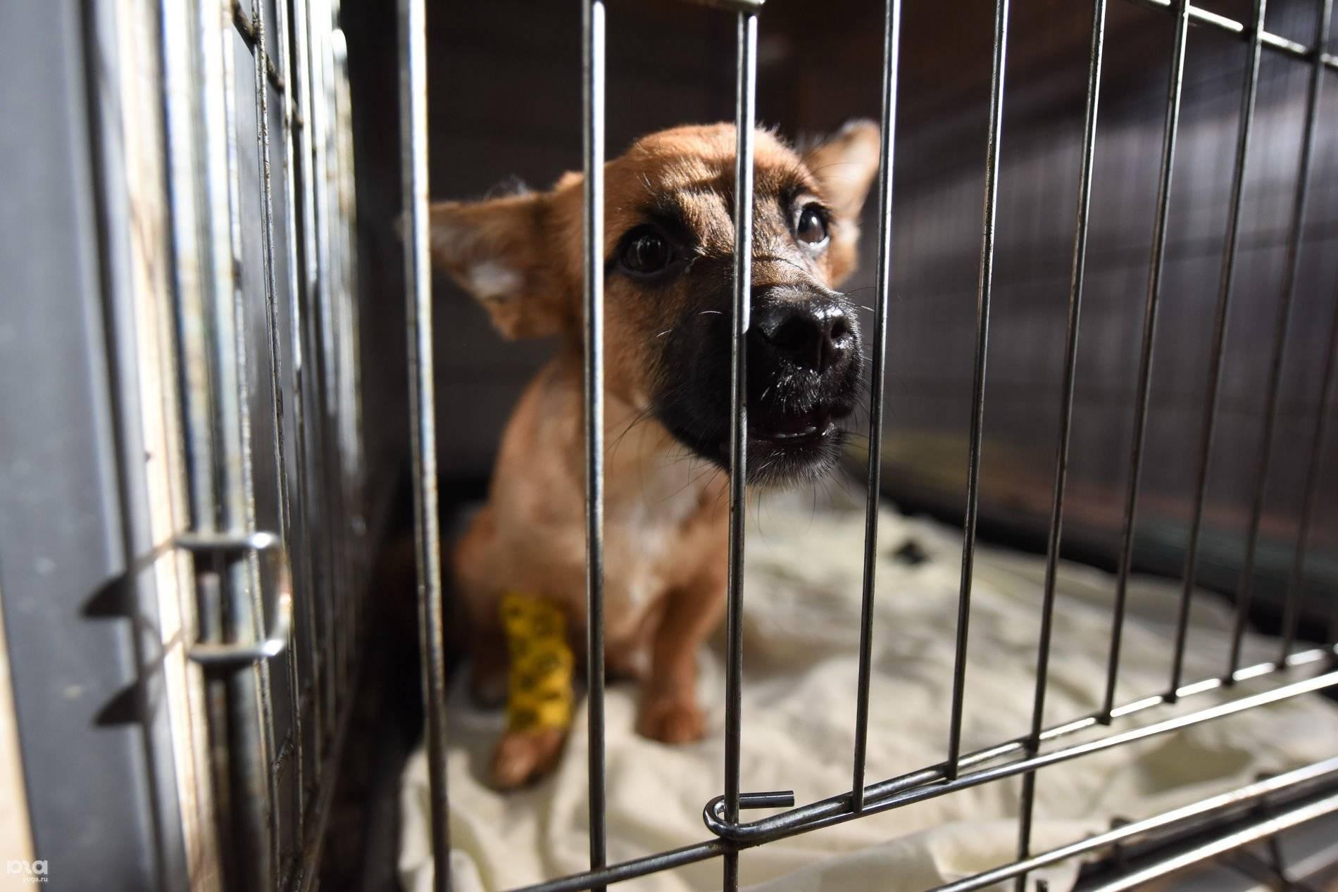 Собаки даром - в дар, в добрые руки бесплатно в москве