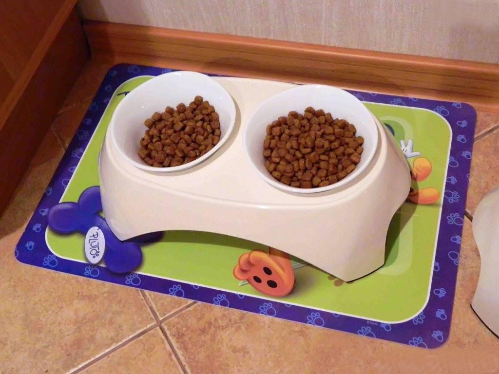 Как отучить кота от сухого корма? переводим кошку на домашнюю еду