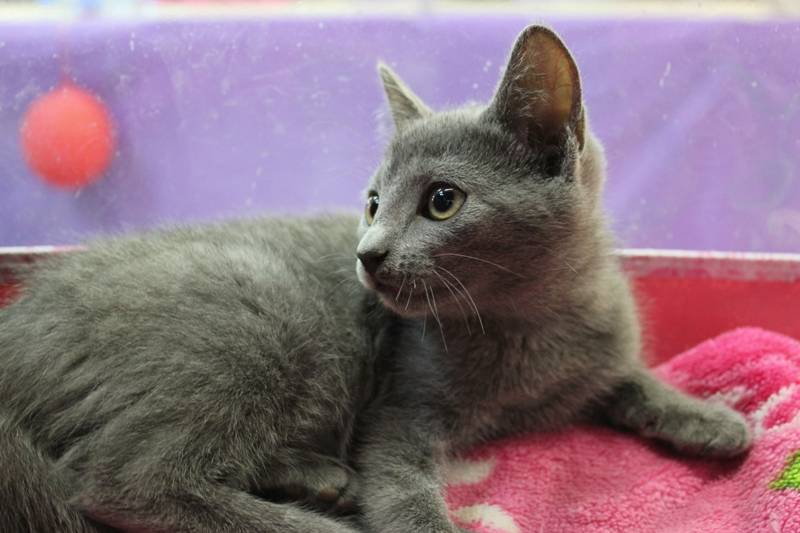 Питомники кошек, каталог питомников кошек