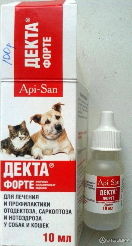 Грязные уши у кошки: причины, симптоматика, методы лечения