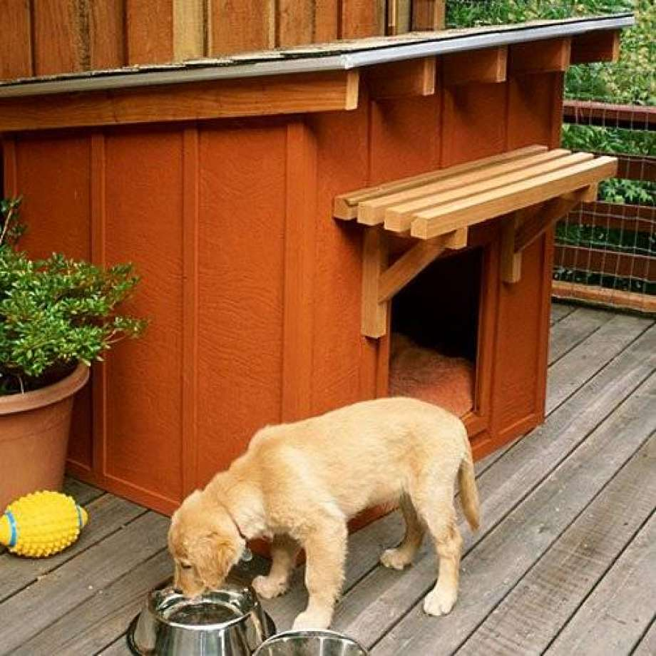 Как приучить собаку жить в будке