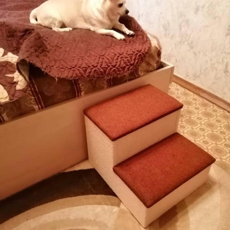 Лестницы для собак: что это такое и как выбрать?