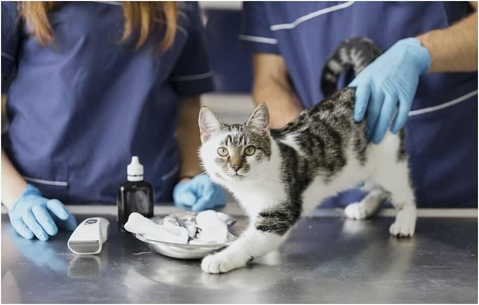 Чем лучше кормить кошку: разновидности кормов, плюсы и минусы, советы ветеринаров для выбора питания кошкам