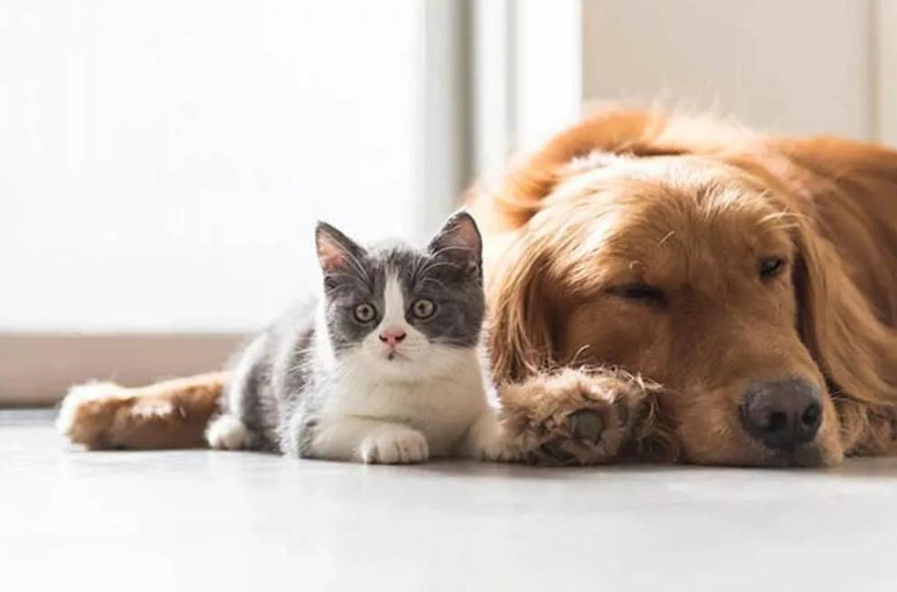 Особенности знакомства кошек, подготовка к совместной жизни питомцев