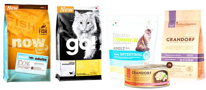 Влажный и сухой корм: каким лучше кормить кошку?