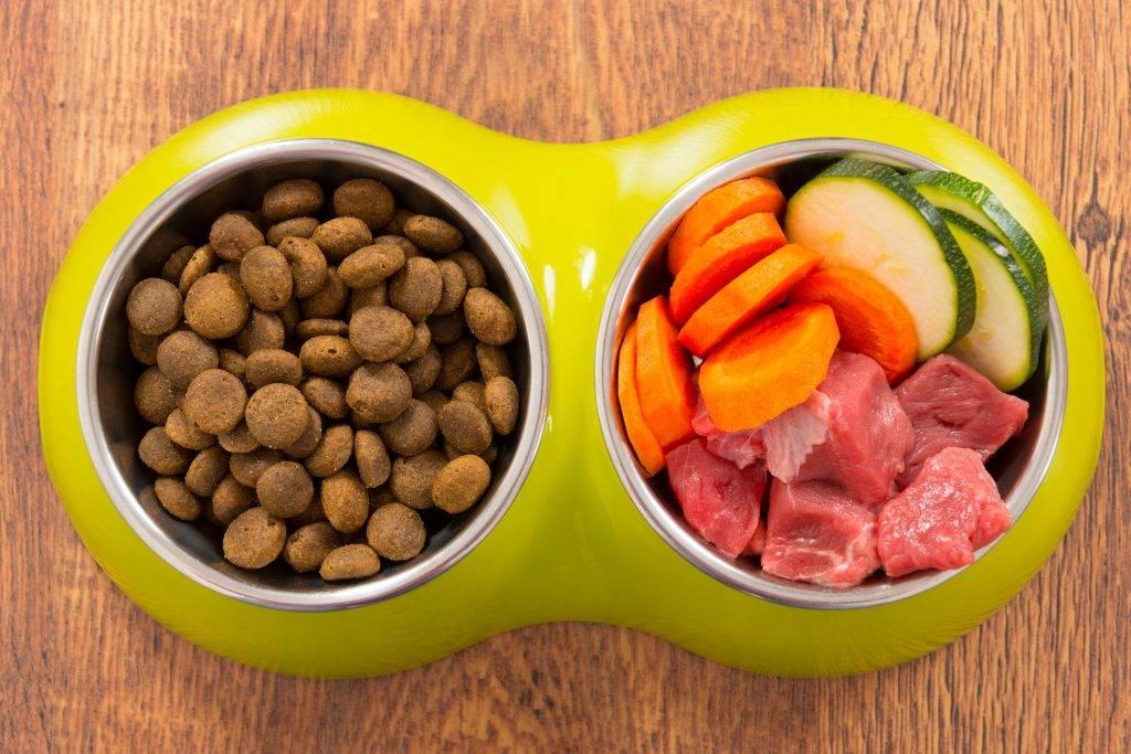 Натуральное кормление кошек: принципы, особенности, что запрещено, рецепты