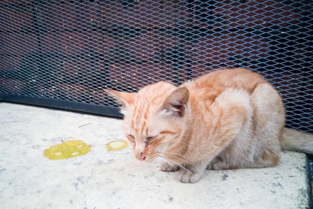 "У кошки (кота) пахнет изо рта: причины, диагностика, лечение, профилактика   блог ветклиники ""беланта"""