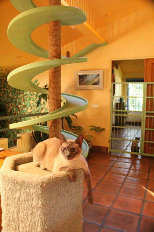 Один дома. как долго кот может продержаться в квартире без вас