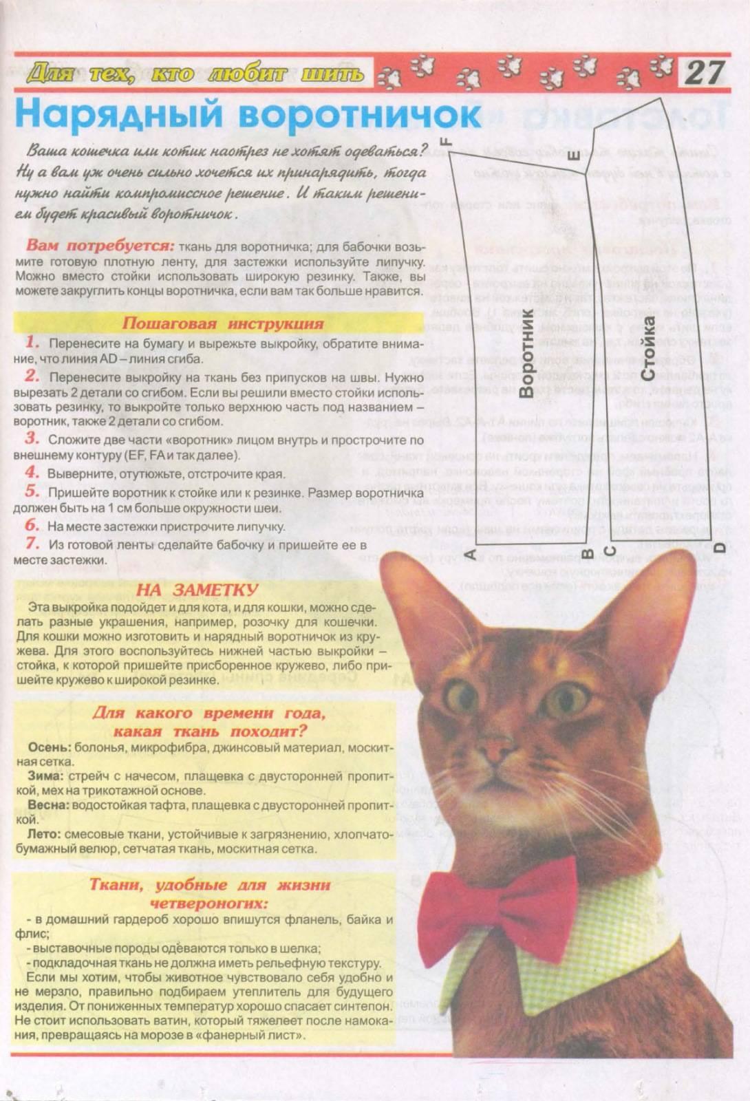 Защитный воротник для кошки: зачем нужен, как выбрать в магазине и как сделать самостоятельно