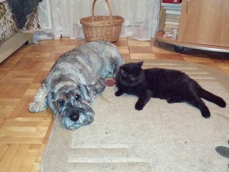 Кошка или собака: кто лучше и кого завести